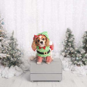 christmas photoshoot peterborough
